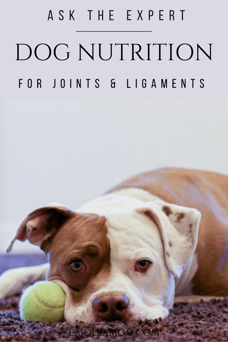 285 best pets images on pinterest animals american bulldogs and