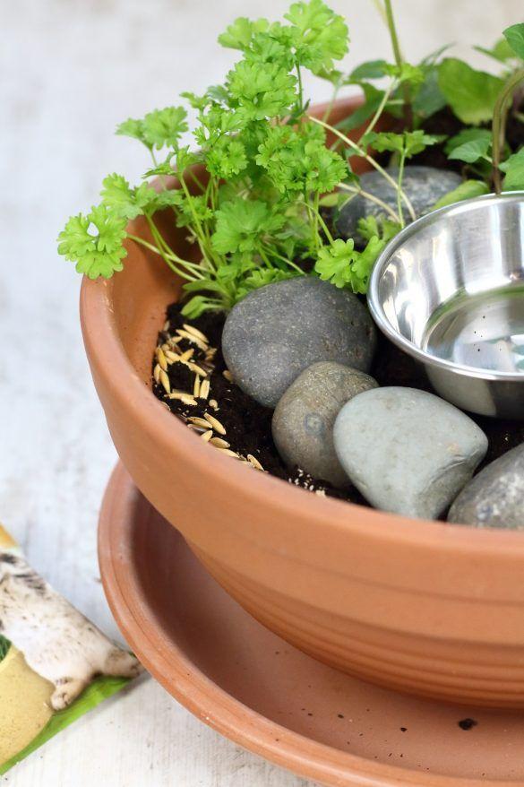 DIY cat garden for home cats