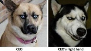 If Dogs Worked in Offices – A humorous pictorial description of which dogs would hold what position if they worked in the corporate world.  CUTE!