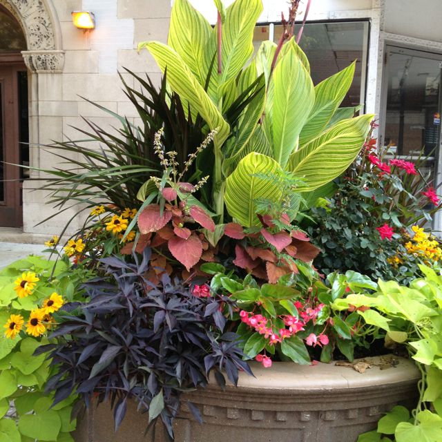 41 best images about Dramatic planters on Pinterest