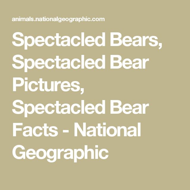 Spectacled Bears, Spectacled Bear Pictures, Spectacled Bear Facts - National Geographic