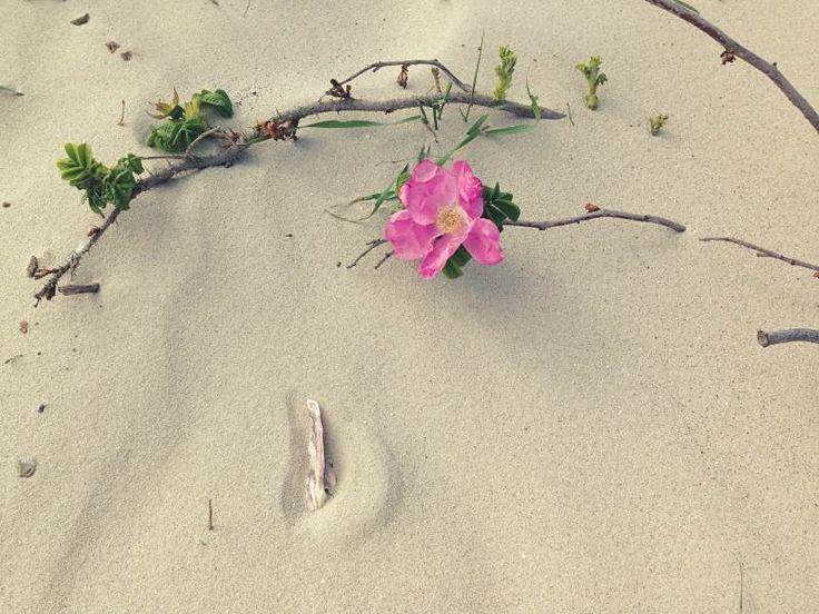 Wo die Blumen aus dem Sand wachsen