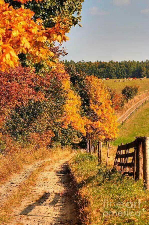 Pin By Linda Gaddy On Nature Autumn Landscape Autumn Scenery