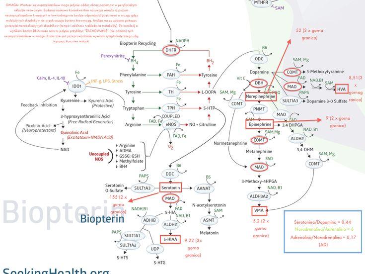 Biopterin corelation analysis sample.png (1200×899)