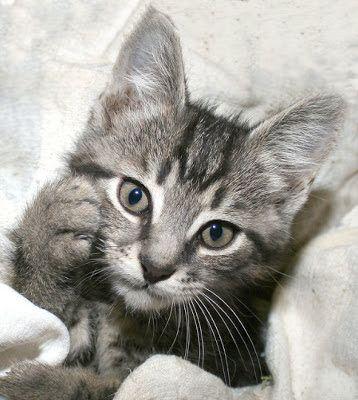 Imagenes de gatos - gatitos: Imagen gatito preocupado  [11-4-17]