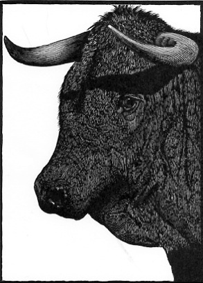 "Wood Engraving by Barry Moser (one of 31) to illustrate ""Mark Twain's Book of Animals"""