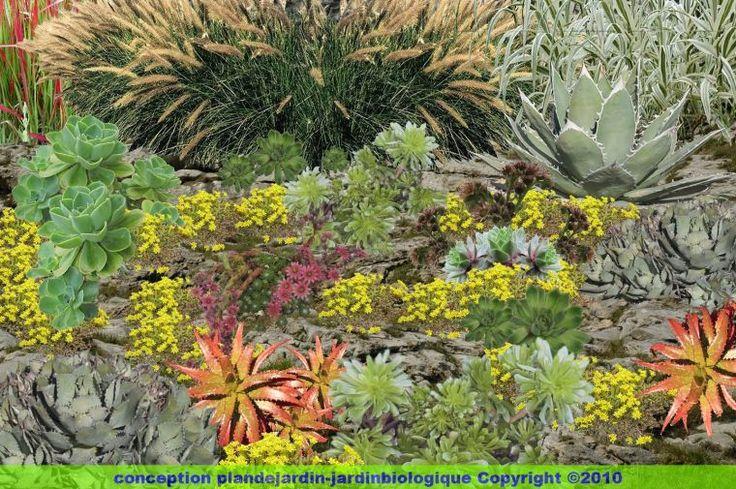 82 melhores imagens de plantes succulentes no pinterest babosa cacto e suculentas. Black Bedroom Furniture Sets. Home Design Ideas