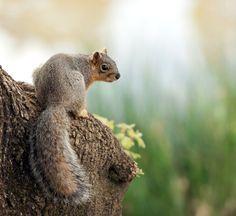 shooting a squirrel essay