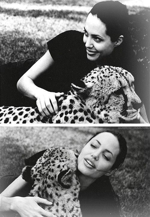 Angelina Jolie / Cheetah