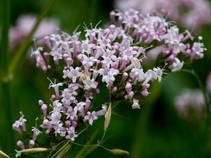 herbar-rostlin