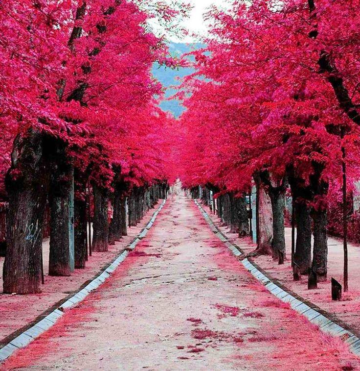 el escorial madrid spain. es done el rey de espana vive. tambien los arboles son precioso. espiere que caminar o correr alado de los arboles.