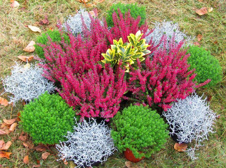 Die besten 25 grabbepflanzung winter ideen auf pinterest for Balkonpflanzen winter