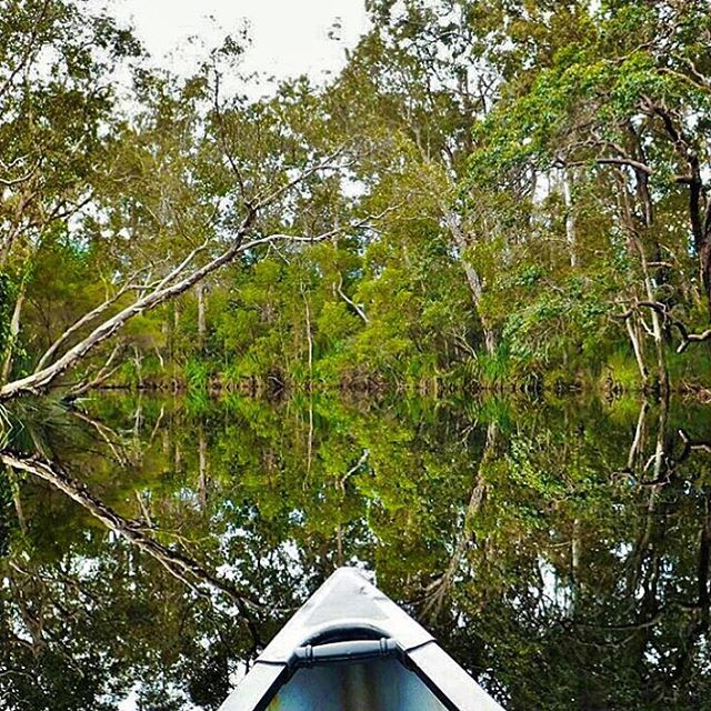 It's easy to see why the Noosa Everglades are nicknamed the River of Mirrors! One of only two Everglades systems in the world, the Noosa Everglades are an incredible sight, representing an unchanged and ancient waterway.