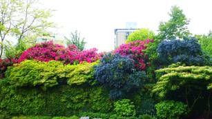 1000 ideen zu bl hende hecke auf pinterest sonnenhut buchsbaumhecke und kies landschaftsbau. Black Bedroom Furniture Sets. Home Design Ideas