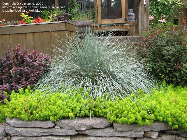 The bright green ground cover is Angelina Sedum. A drought tolerant perennial that spreads quickly