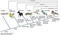 Evolutiebiologie: oktober 2010