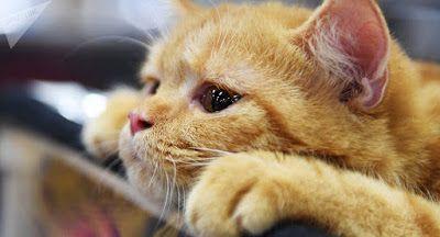 sauver la chatte gratuit poilu Ebony vidéos
