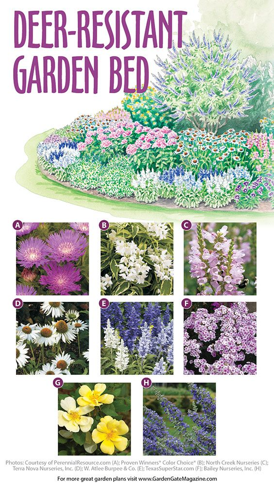 Deer-resistant Garden Bed Plan