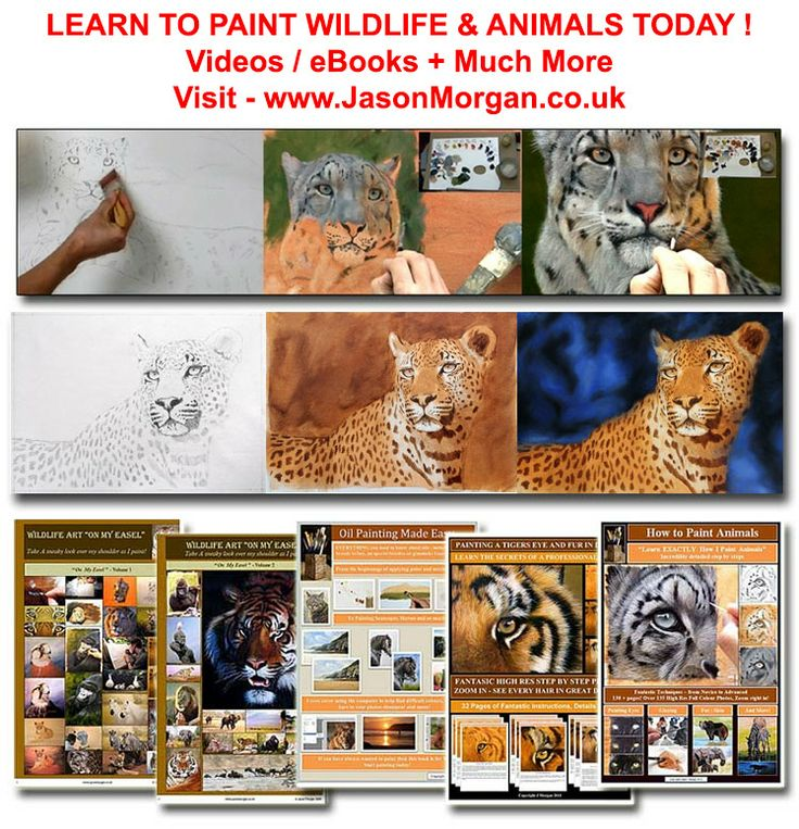 "come and visit my ""Learn to paint wildlife art"" site - www.jasonmorgan.co.uk"