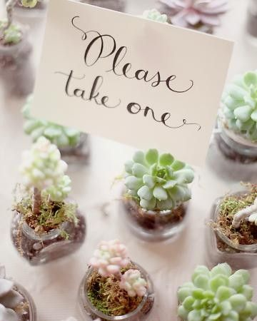 Very inexpensive wedding favour. The plant can grow as the love of the newlyweds does! What a great idea.