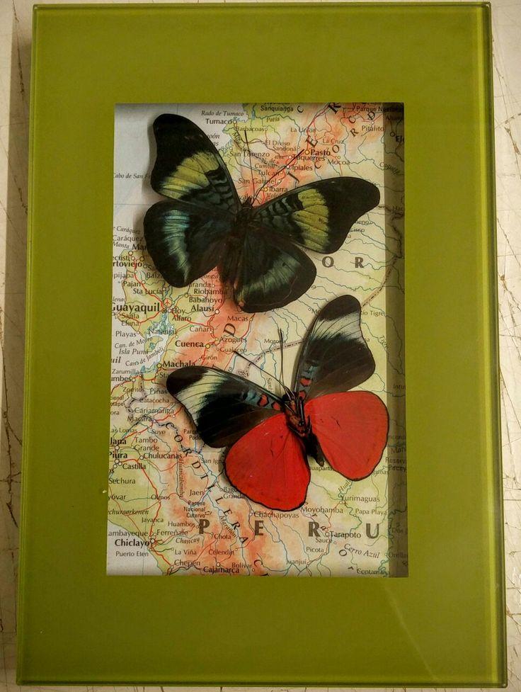 Prola beauty on a Peru map..