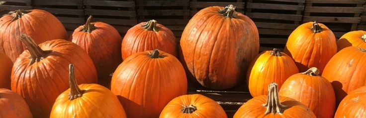 Favorite Pumpkin Picking Spots in NJ