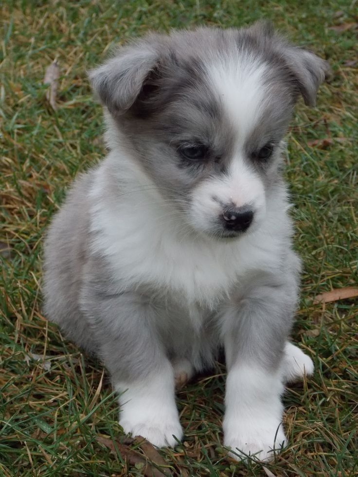 Pin By Daphne Headley On Babies Cute Animals Puppies Cute Baby Animals