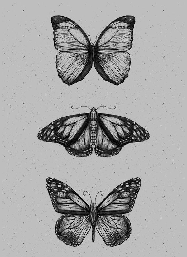 Butterfliez on Behance