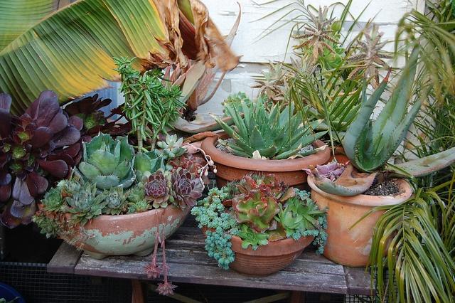 Succulent containers.  #succulent #container #garden