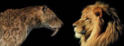 León cavernario americano vs Dientes de sable. | Animales prehistóricos