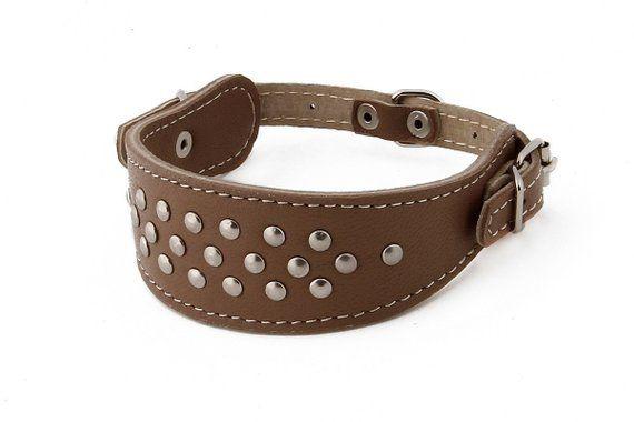 Greyhound Leather Dog Collar Studded Size S M L Adjustable
