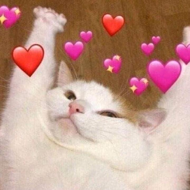 Милые картинки котик с сердечком можете