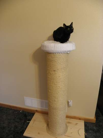 Best Cat Scratching Post ever DIY. I made this and my cats are IN HEAVEN. So worth it!