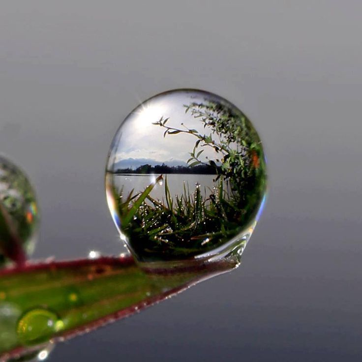 An amazing view through a droplet of water on the tip of a leaf. Very cool.