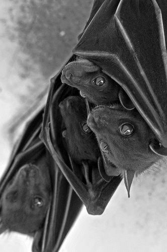 Look freakishly like my lil Bat Dog