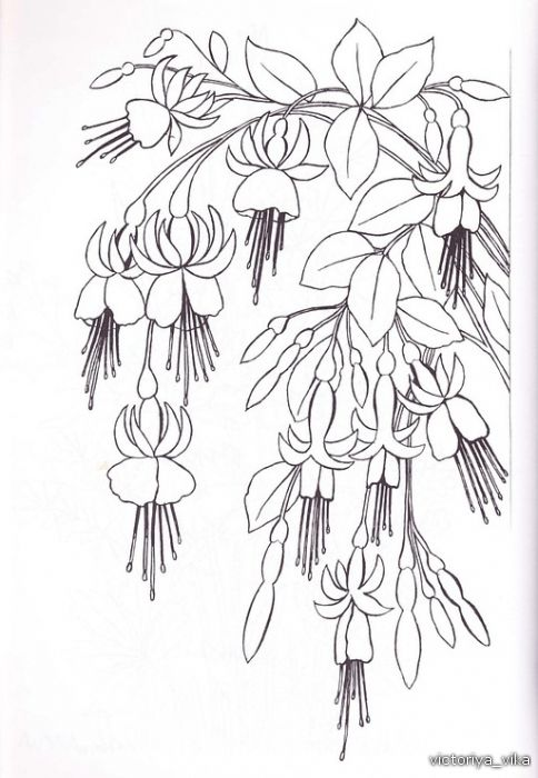 alstroemeria coloring pages - photo#17