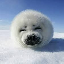 Una pequeña cría de foca. Libertad y hábitat natural... igual #felicidad completa!!!