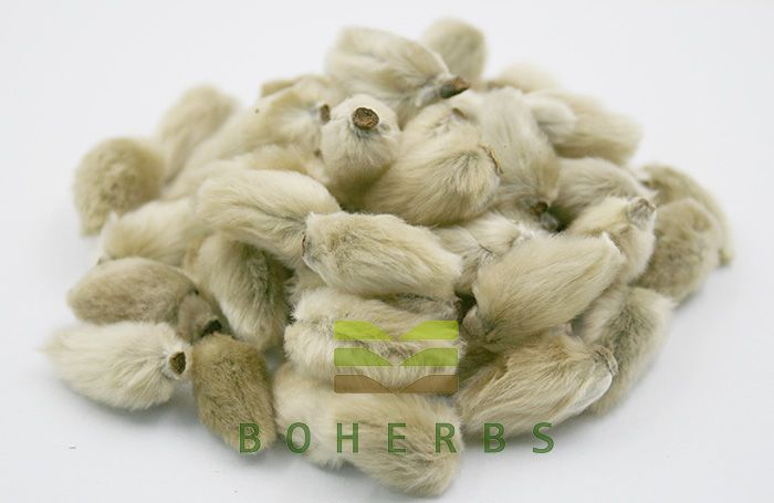 Flos Magnoliae Magnolia Biondii Identification Magnolia Biondii And Magnolia Denudate Which Are Widely Used In Marketing Healthy Herbs Flower Bud Fragrant