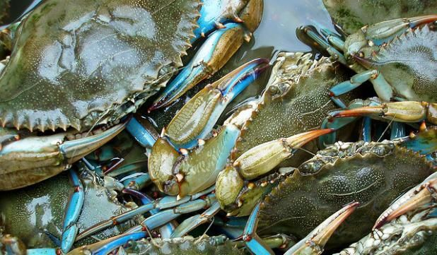 20 secrets to help you catch fish all summer long field for Blue crab fishing