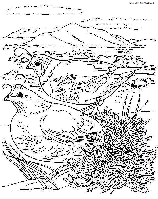 Coloring Pages Manna And Quail