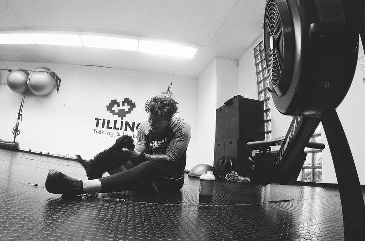 All träning går bättre när det finns HUNDVALP i lokalen! // bästa @saratilling sponsrade med roddmaskin och massage idag perfekt för en sliten kropp. 76 dagar kvar #mandalayatillVM . . . . #la17wpfg #wpfg2017 #cfswe #northernspirit #inov8sverige #tillingträningochlivskraft #concept2 #concept2rower #rodd #row #rowing #rowingwod #masterthemachine #indoorrowing #cardio #lifestylephotography #lifestyle