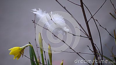 White feathers in easter decoration.