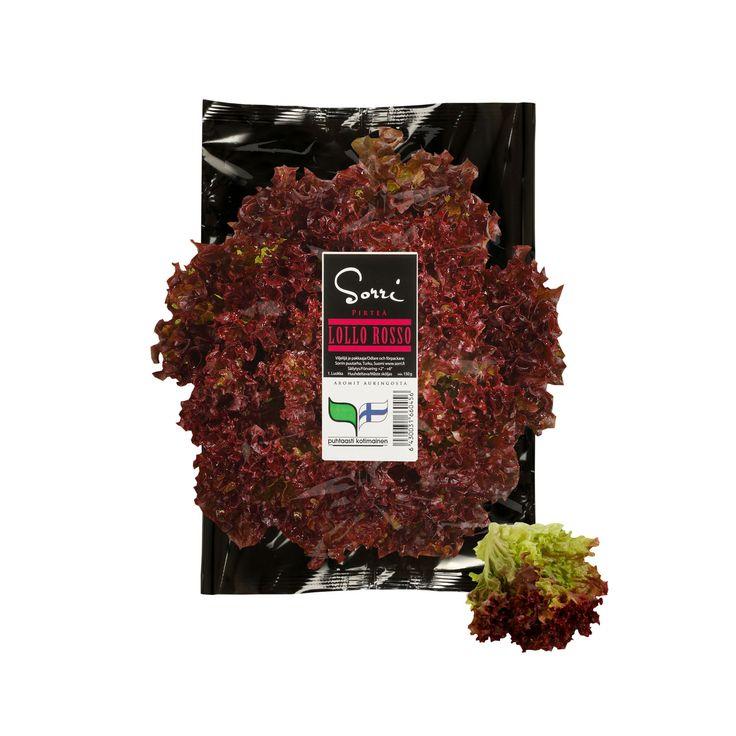 Lollo Rosso -salaatti. Pirteä Lollo Rosso koristaa leivät ja tarjoilut kähäräisen kauniilla ja pehmeillä lehdillään.