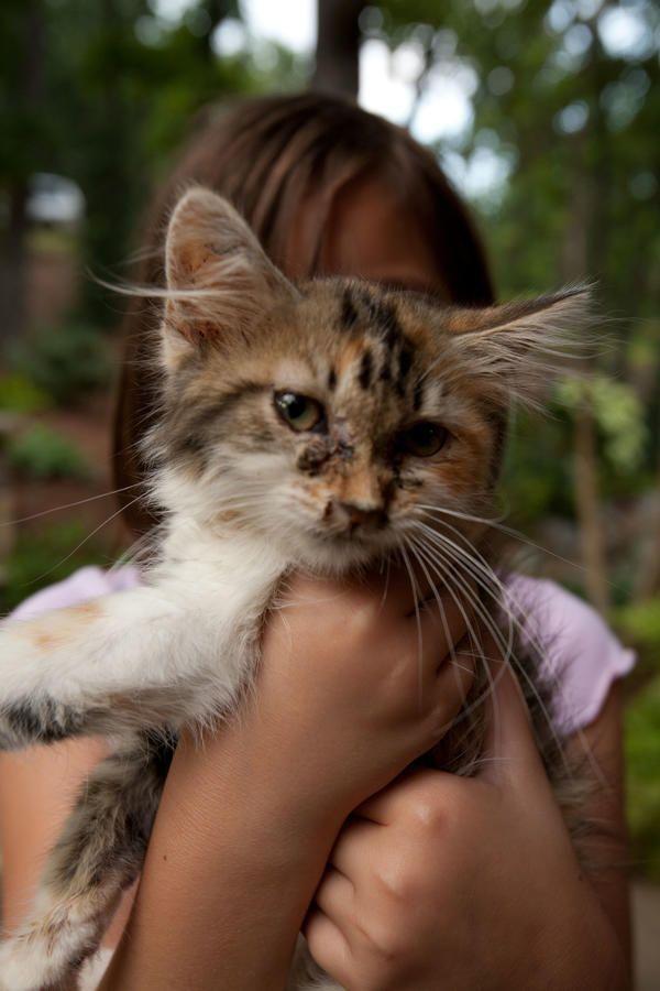 wheat cat litter allergy symptoms