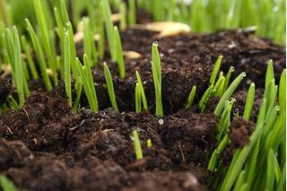 How to Grow Grass from Seed | eHow