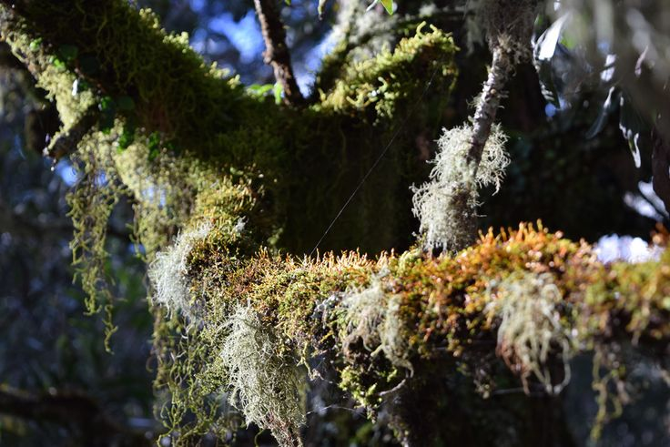 New England National Park - Moss and lichen abound. A photographers paradise.