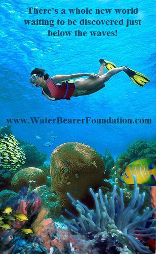 Best Marine Biology Images On   Marine Life Under