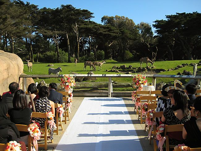 San Francisco Zoo Is A Fun And Affordable Sf Wedding Venue