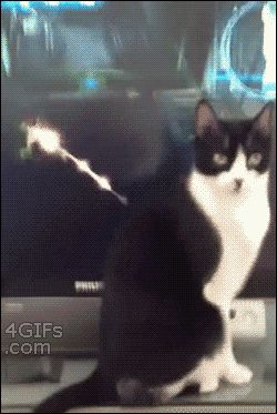 Funny Computer Say No | Pinterest | Cat, Weapons and Animal