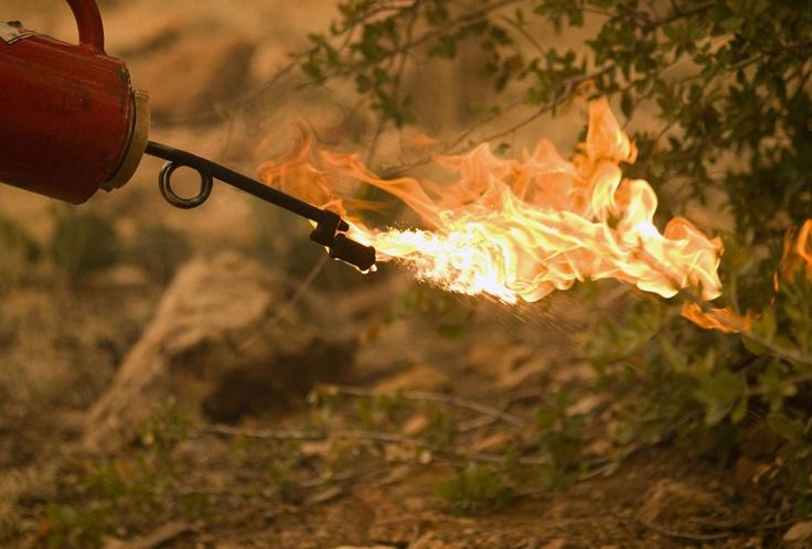 Лесные пожары в штатах Колорадо и Нью-Мексико (США)